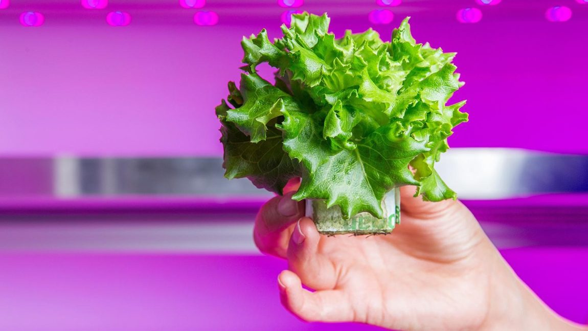 Inovacije u Poljoprivredi – LED Organska Proizvodnja Hrane